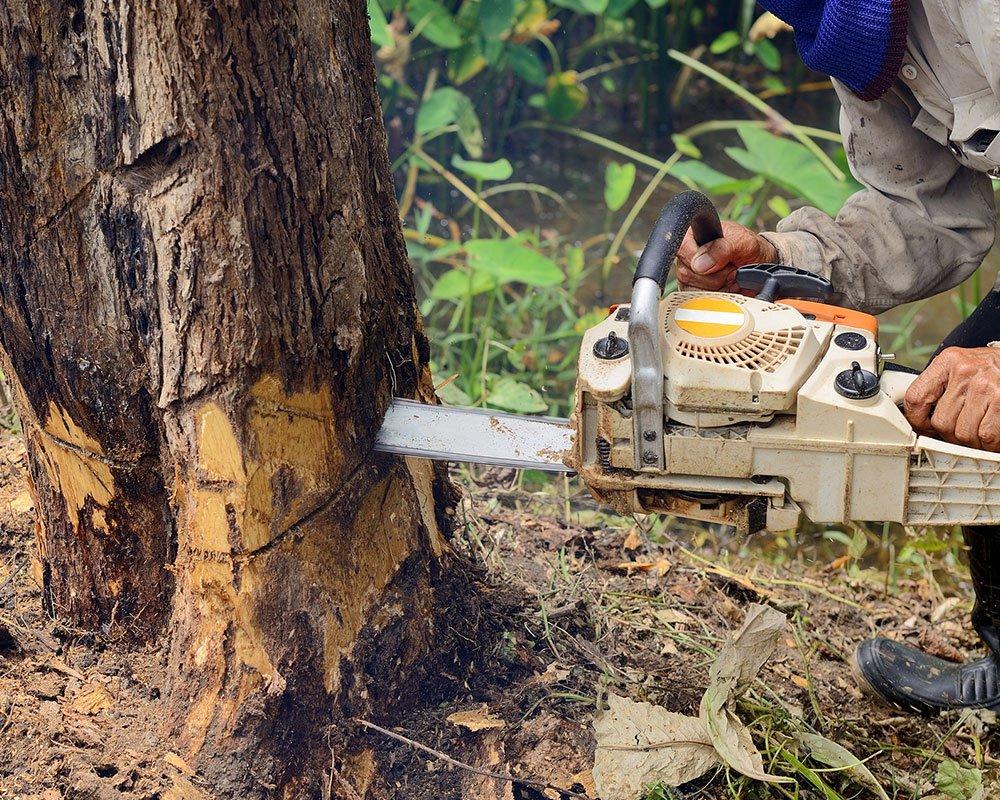 Tree Service Greer - Tree Removal