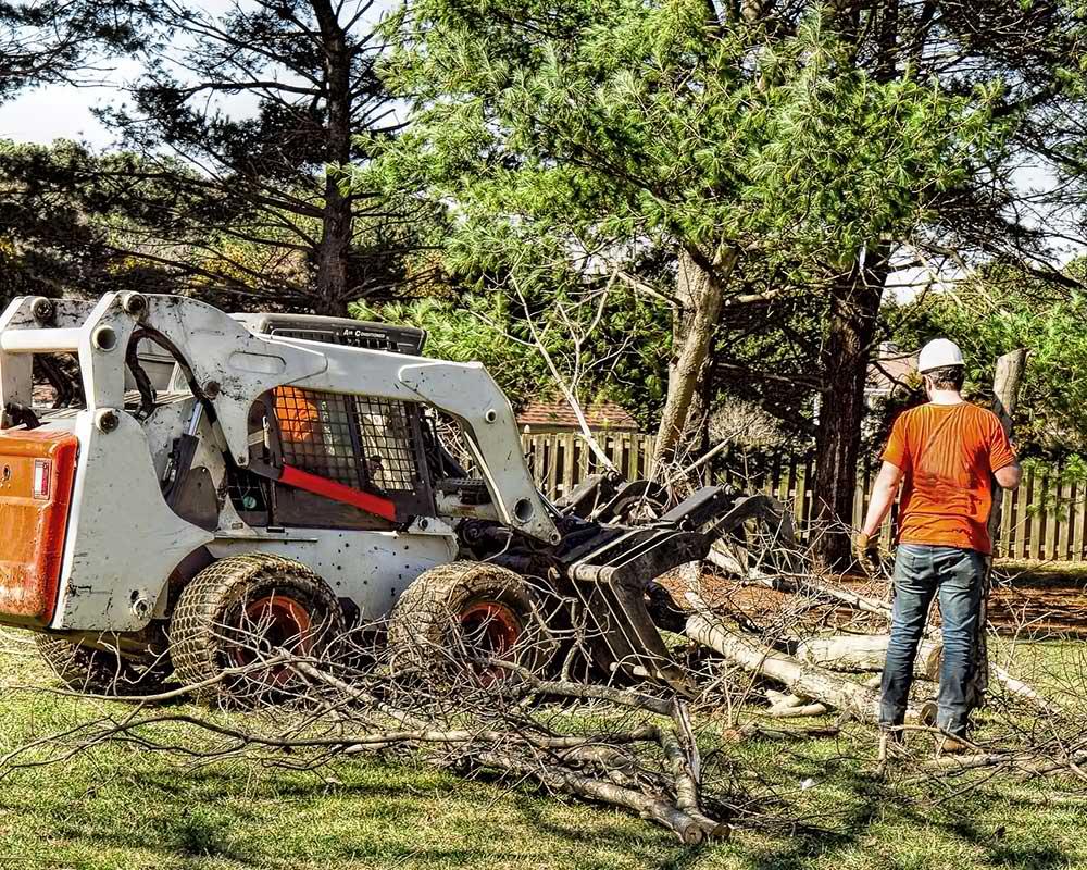 Tree Service Greer - Arborist