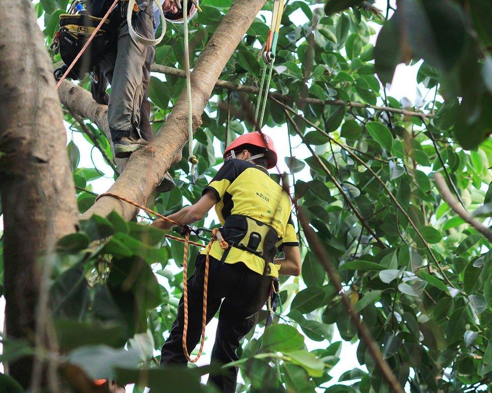 Tree Service Greer - Emergency Tree Removal