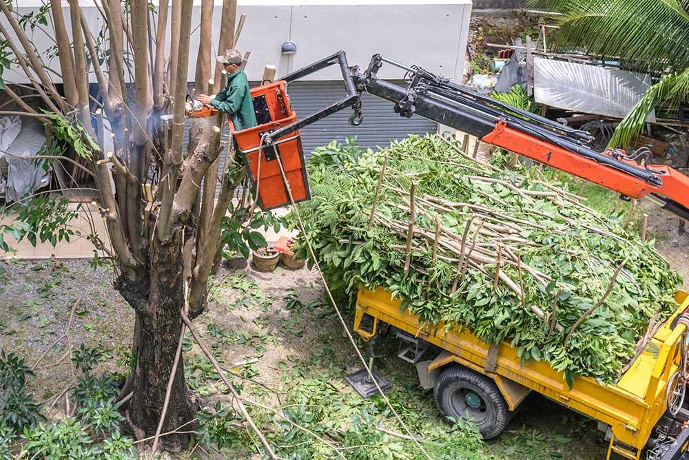 Tree Service Greer - Tree Pruning