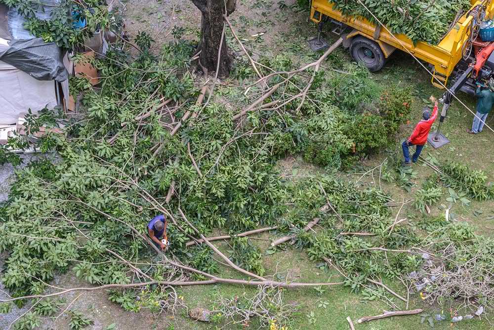Tree Service Greer - Tree Trimming
